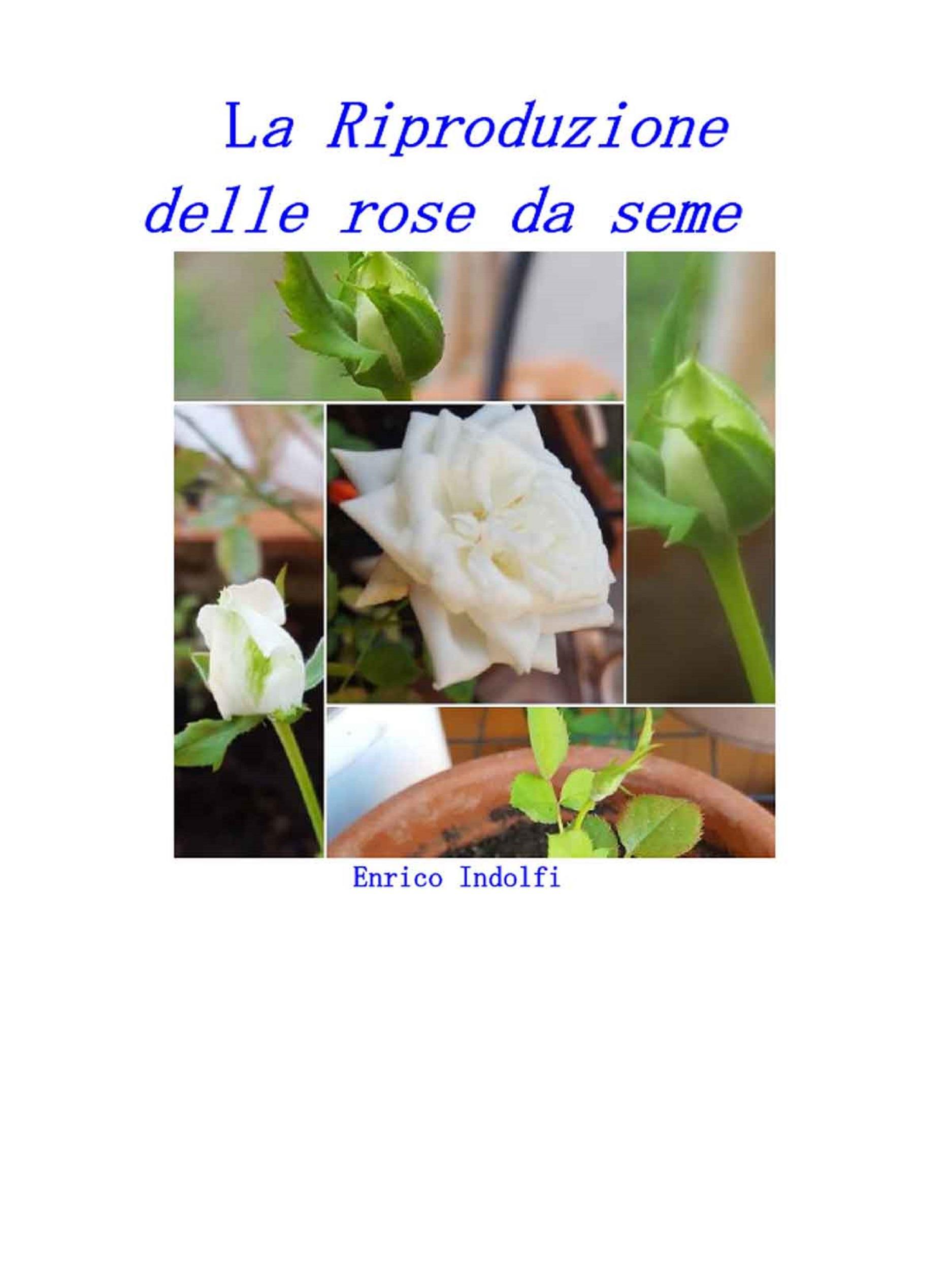 La riproduzione delle rose da seme