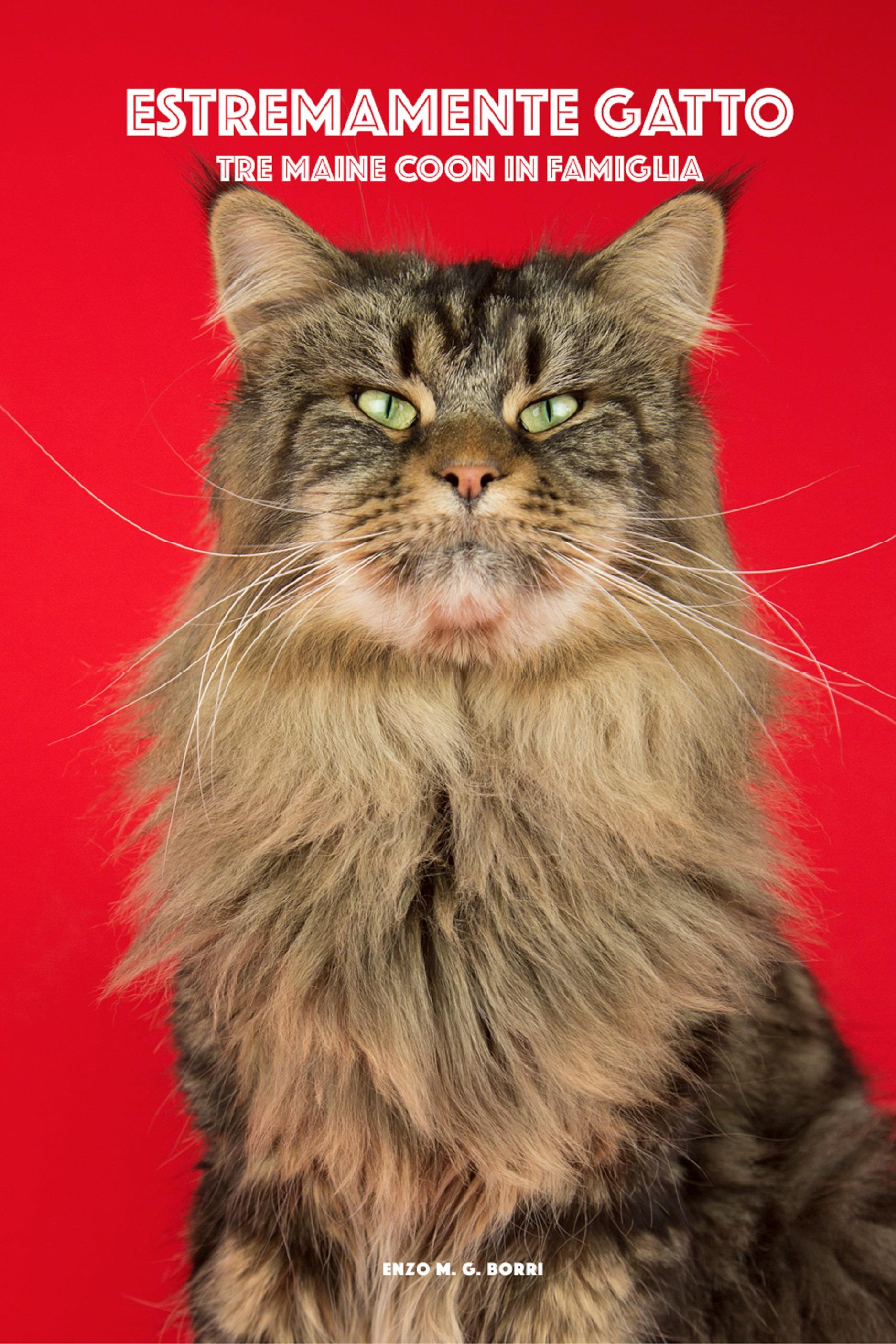 Estremamente gatto - Tre Maine Coon in famiglia