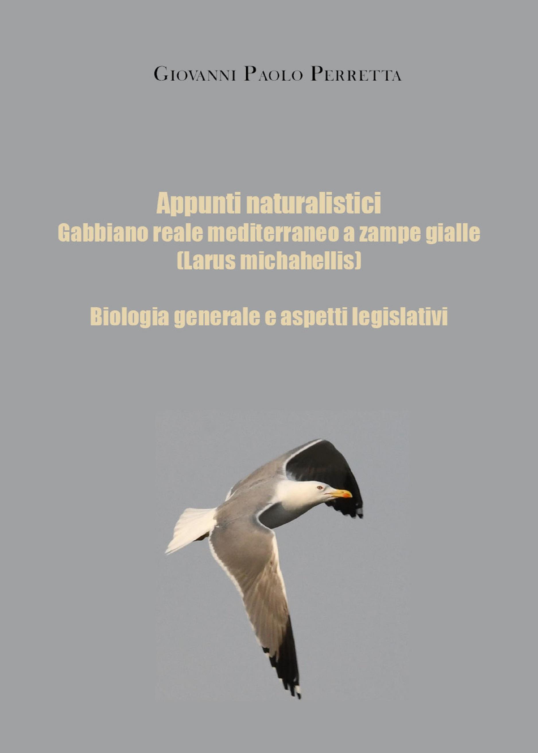 Appunti naturalistici - Gabbiano reale mediterraneo a zampe gialle (Larus michahellis)