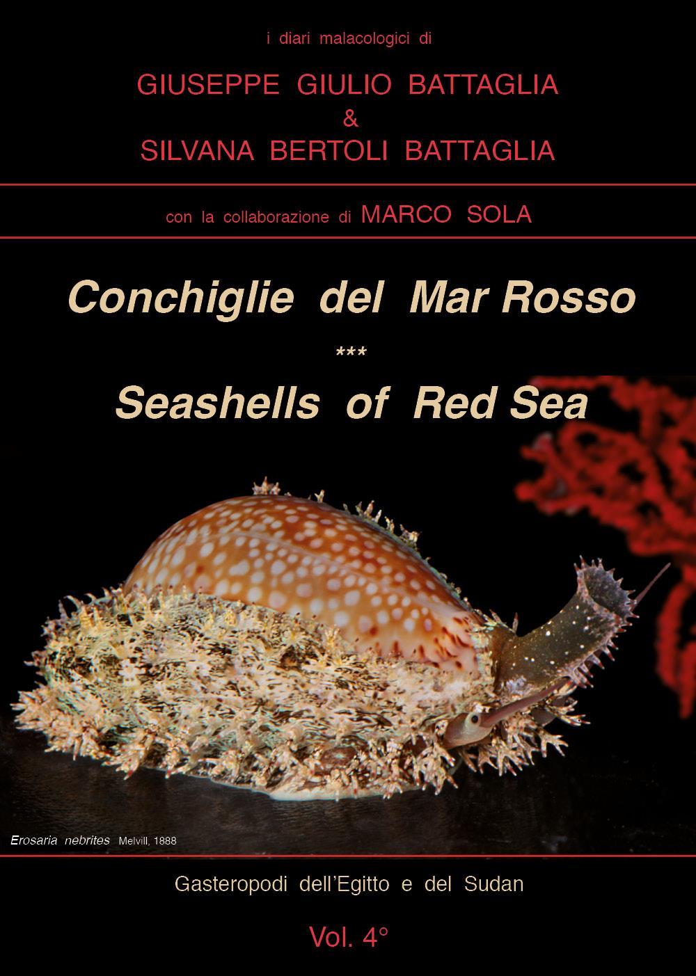 Conchiglie del Mar Rosso - Red Sea's Seashelles